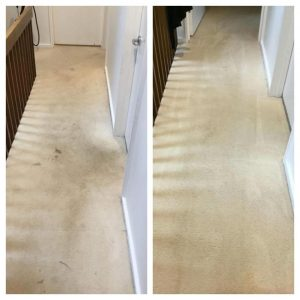 carpet cleaning eastern suburbs